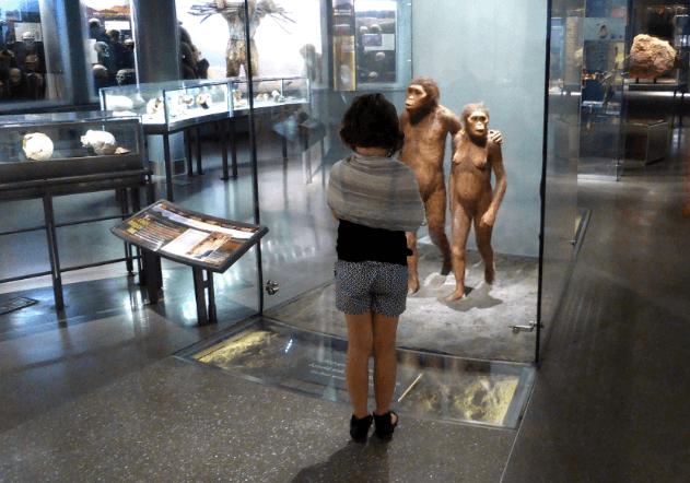 Natural History Museum New York Sleepover