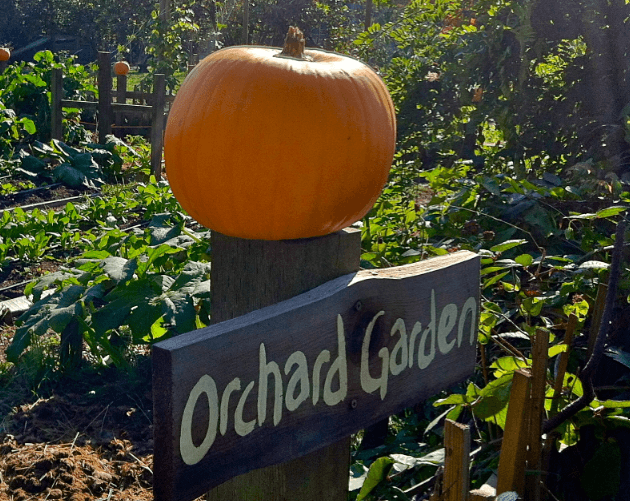 Best Pumpkin Patches Vancouver