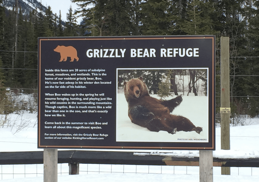 Boo Grizzly Kicking Horse