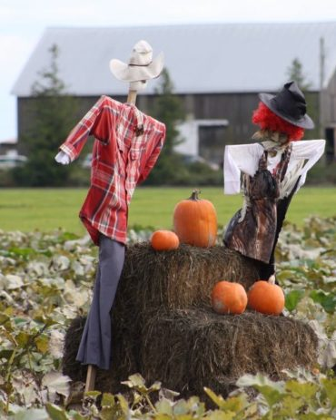 pumpkin picking – greater vancouver 2015
