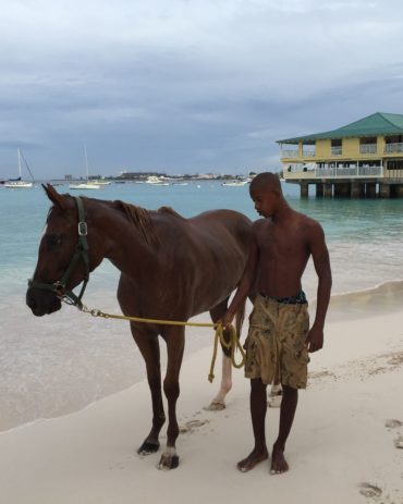The Swimming Race Horses of Barbados
