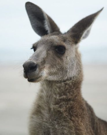 Australia – 10 Amazing Experiences for Kids