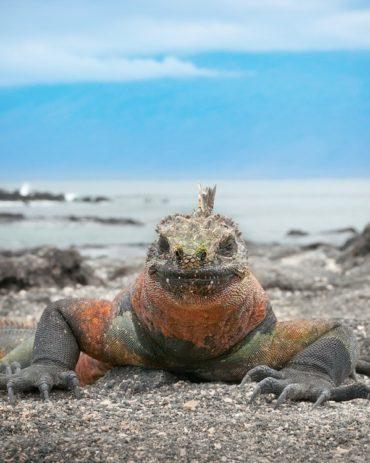 Galapagos Vacation – Cruise or Land Based Island Hopping?
