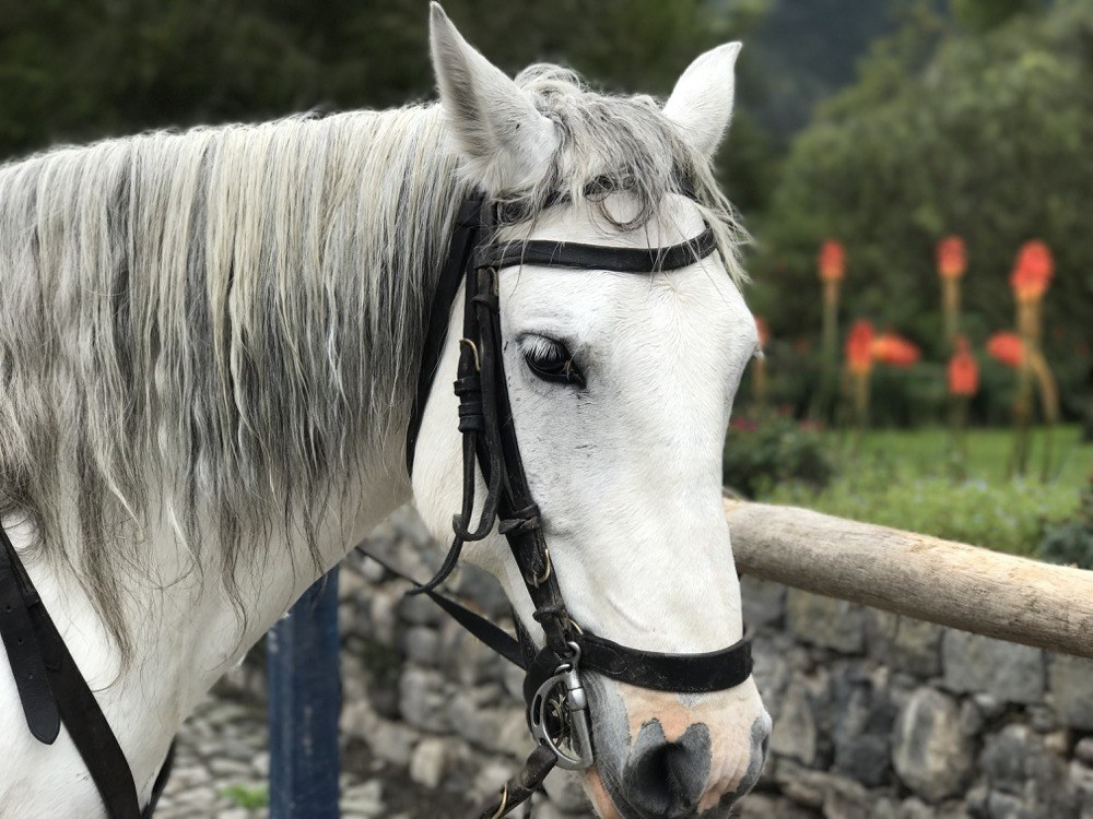 Ecuador Hacienda - Horseback Riding Zuleta