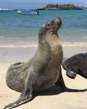 A Galapagos Luxury Cruise – Galapagos Islands Family Vacation